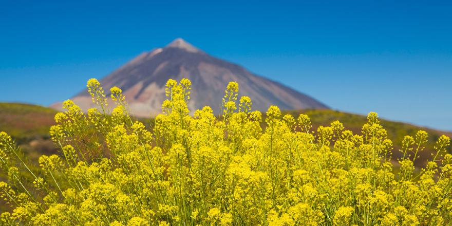 tenerife-yellow
